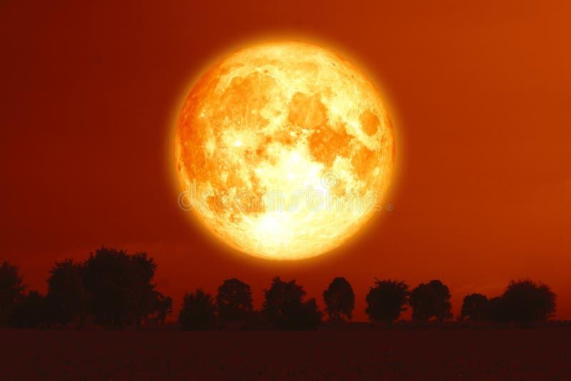 luna piena del sangue del raccolto sugli alberi rossi della siluetta e del cielo immagine stock