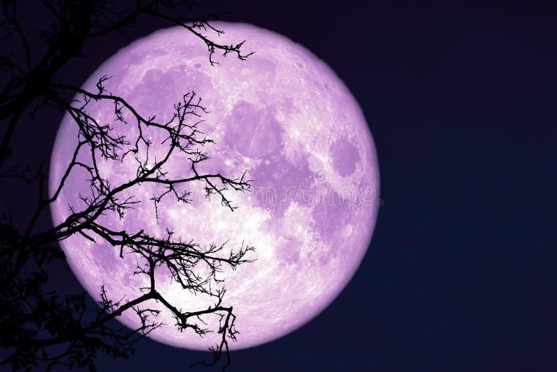 luna piena del verme indietro sulla pianta e sugli alberi della siluetta su cielo notturno immagine stock