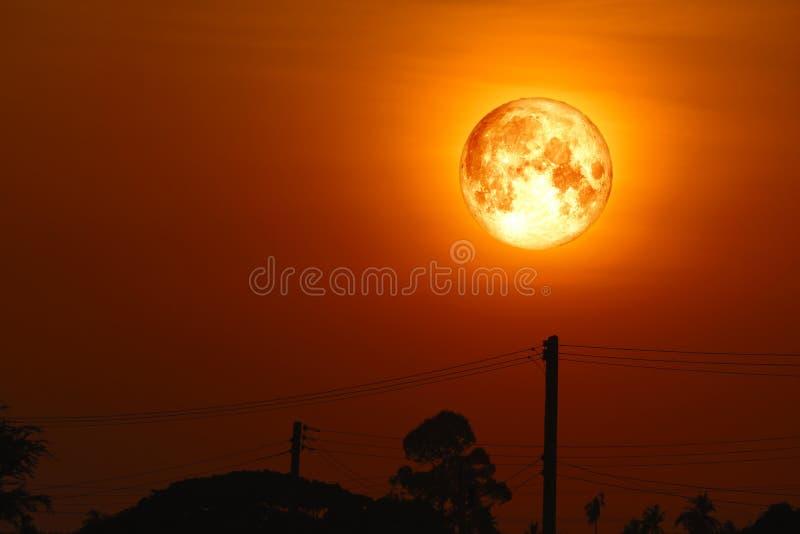 luna piena dell'uovo indietro sulla pianta e sugli alberi della siluetta su cielo notturno immagini stock libere da diritti