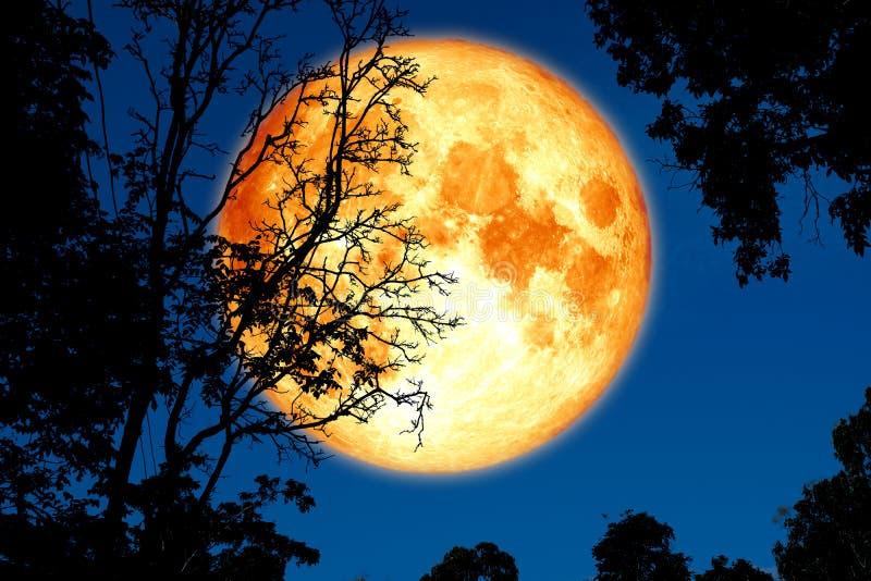 luna piena della crosta indietro sulla pianta e sugli alberi della siluetta su cielo notturno fotografie stock