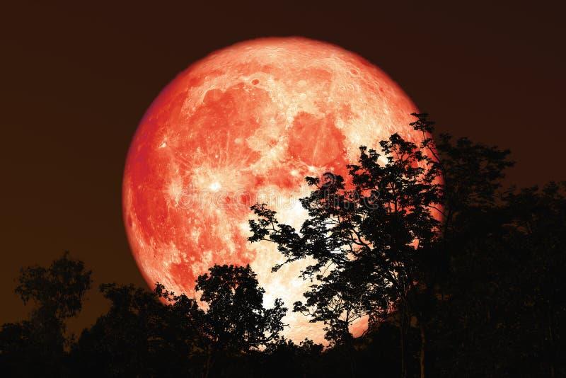 luna piena della linfa indietro sulla pianta e sugli alberi della siluetta su cielo notturno immagine stock libera da diritti