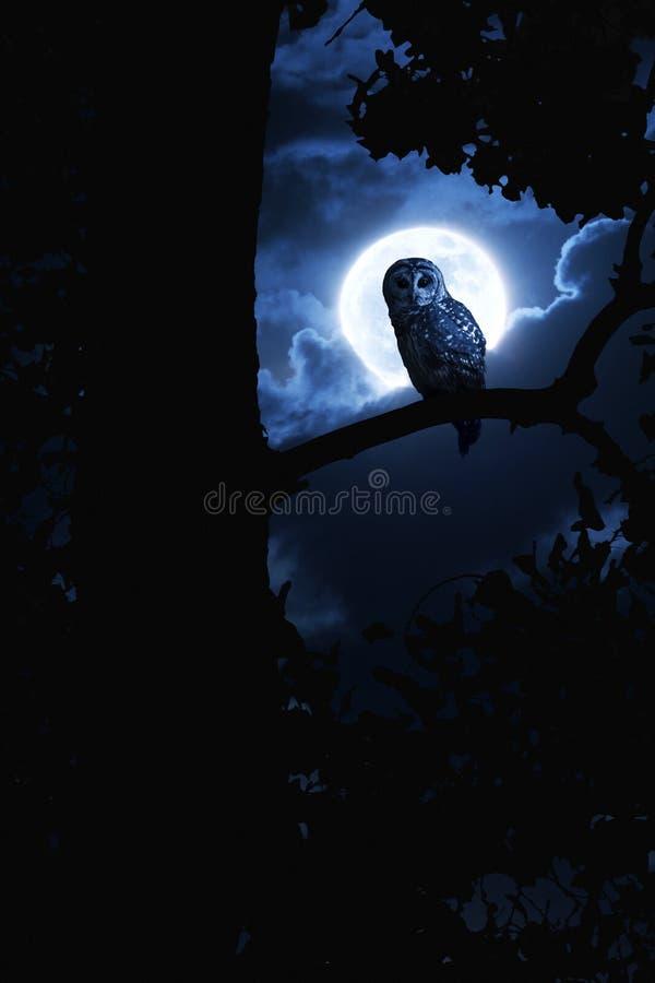 Luna piena di Owl Watches Intently Illuminated By sulla notte di Halloween fotografia stock