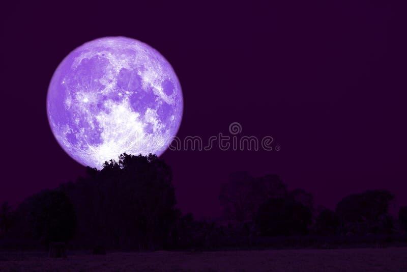 luna piena di tuono su cielo notturno indietro sopra la foresta della siluetta fotografia stock