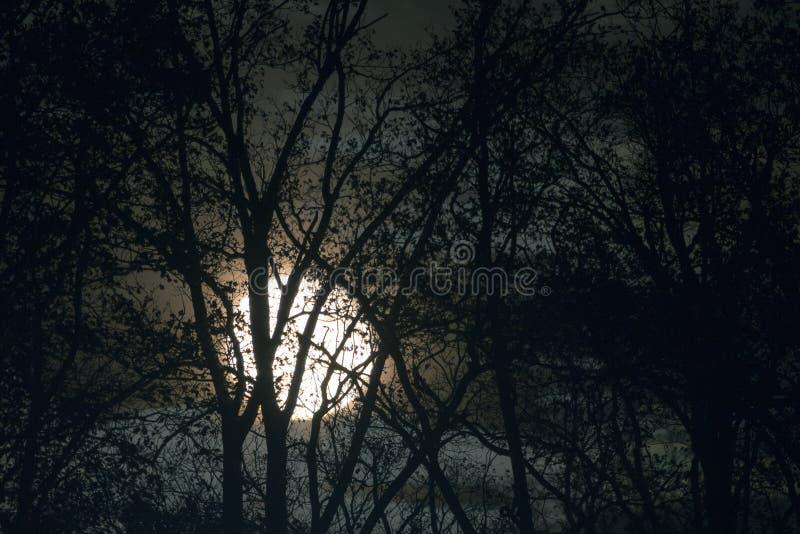 Luna piena dietro i rami di albero ed i ramoscelli nudi nella notte fotografie stock libere da diritti