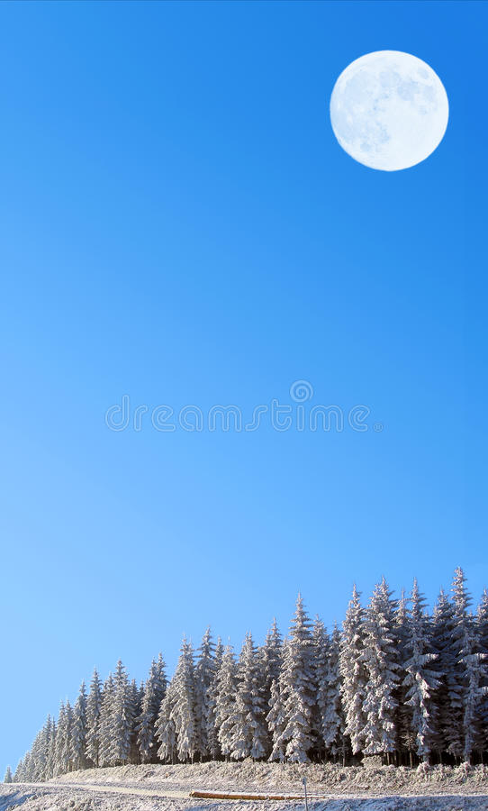 Luna piena e foresta innevata immagini stock