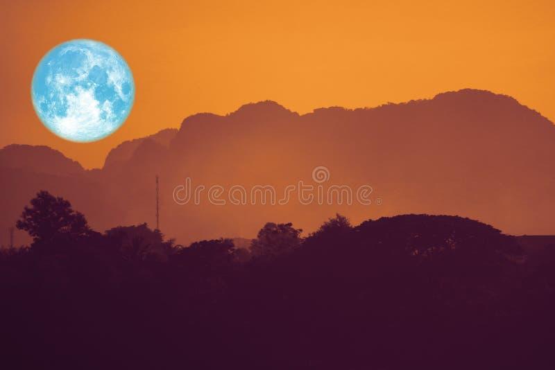 luna piena eccellente del fiore indietro sulla pianta e sugli alberi della siluetta su cielo notturno immagine stock libera da diritti