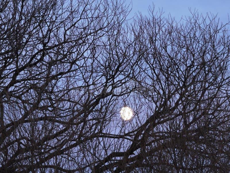 Luna piena ed albero fotografia stock