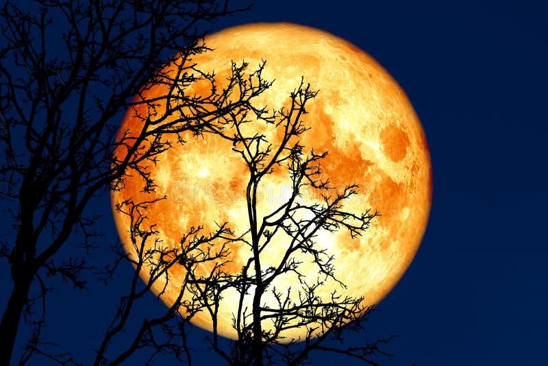 luna piena germogliare indietro sulla pianta e sugli alberi della siluetta su cielo notturno immagine stock