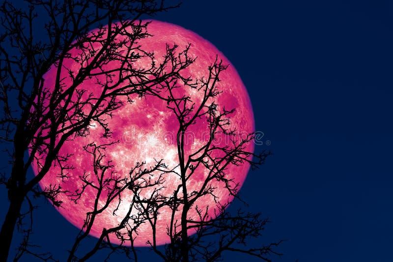 luna piena germogliare indietro sulla pianta e sugli alberi della siluetta su cielo notturno fotografia stock libera da diritti