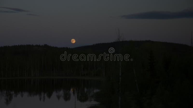 Luna piena gialla immagine stock