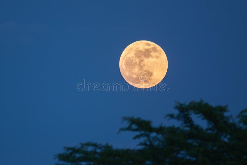 Luna sopra gli alberi immagini stock libere da diritti