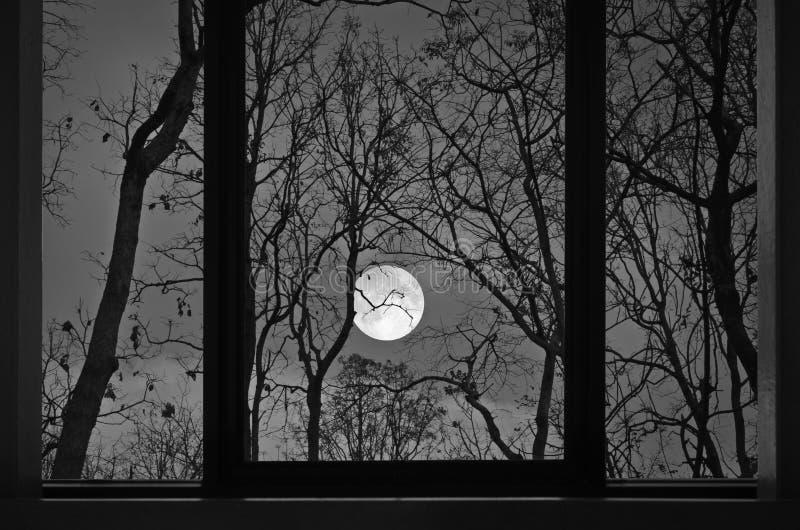 Luna piena romantica nella vista della finestra della casa nella foresta immagini stock libere da diritti