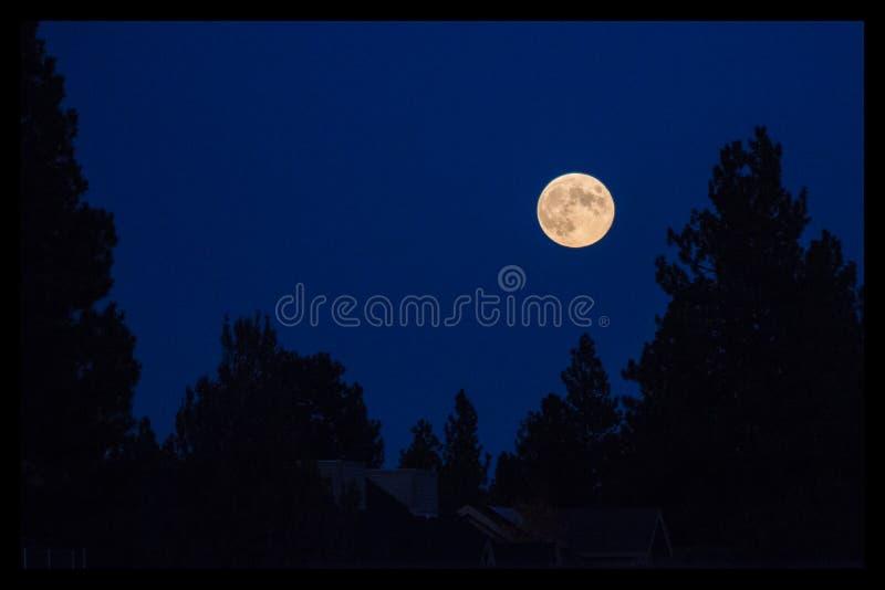 Luna piena sopra gli alberi fotografia stock libera da diritti