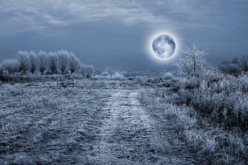 Luna piena sopra gli alberi coperti da hoarfrost fotografia stock libera da diritti