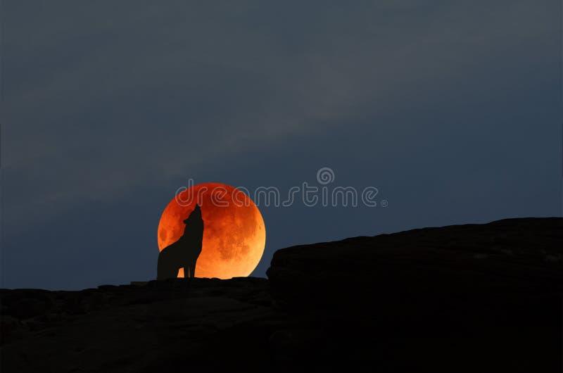 Luna roja y aullar perro salvaje en el acantilado por la tarde imagenes de archivo