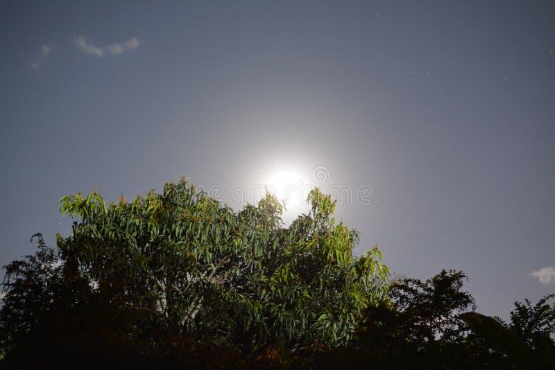 Luna sopra gli alberi fotografie stock libere da diritti