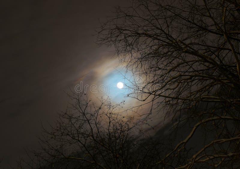 Luna su un ramo fotografia stock