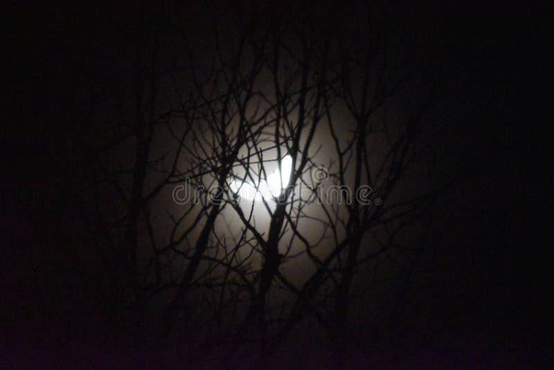 Luna a trav?s de los ?rboles fotografía de archivo