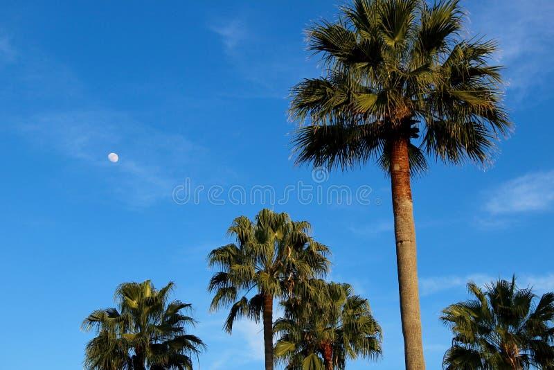 Luna vista durante el día foto de archivo