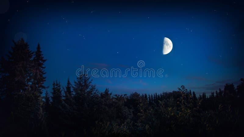 Luna y estrellas oscuras - fondo hermoso de Forest Night With Bright Big del paisaje imágenes de archivo libres de regalías