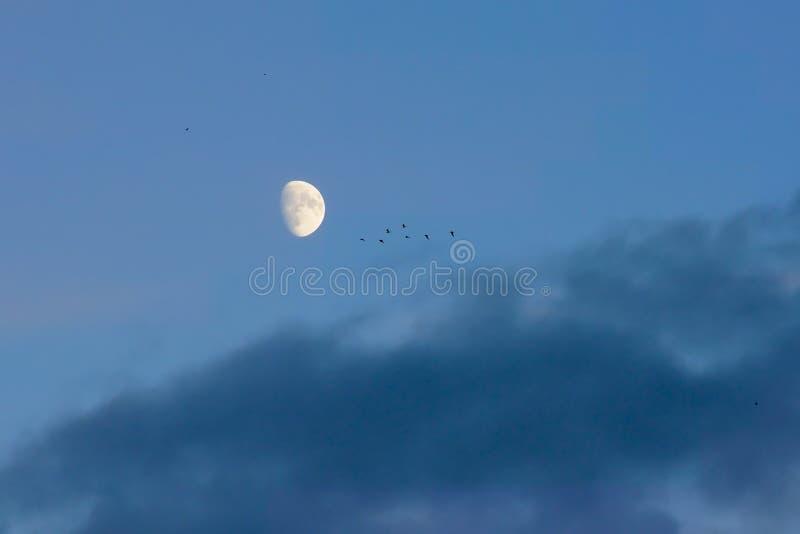 Luna y pájaros en un cielo nublado fotos de archivo libres de regalías