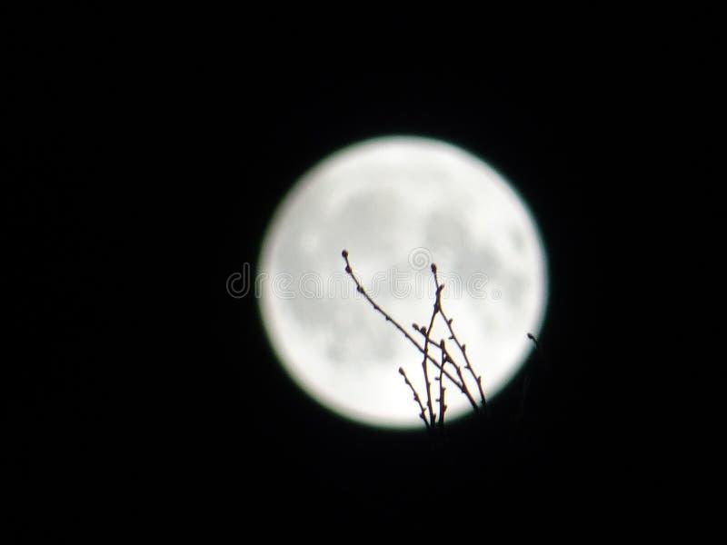 Luna y ramitas fotografía de archivo