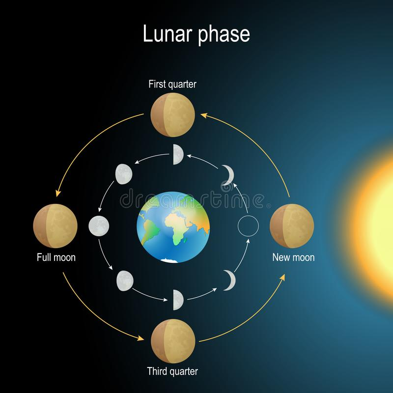 Lunar phase. phase of the Moon. Lunar phase. phases of the Moon depends on the Moon`s position in orbit around the Earth and the Earth`s position in orbit around royalty free illustration