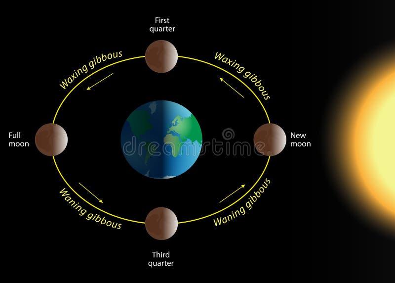 Lunar phase stock illustration
