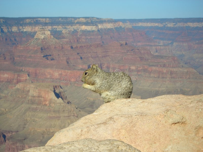 Download Lunch stock photo. Image of tour, mammal, arizona, squirrel - 464446