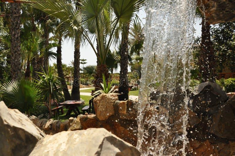 Lunch pod drzewkami palmowymi obrazy stock