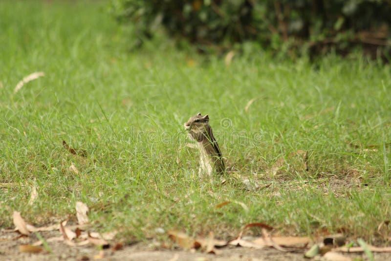 Lunchtijd voor eekhoorn royalty-vrije stock afbeeldingen