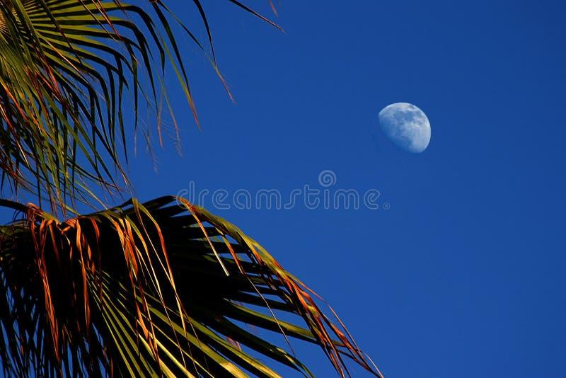 Download Lune photo stock. Image du paisible, bleu, exotique, croissant - 737790