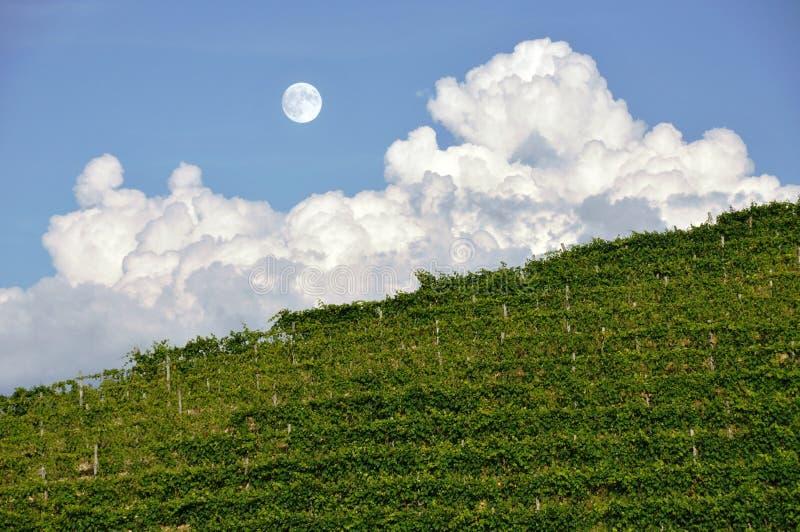 Lune au-dessus de vigne images libres de droits