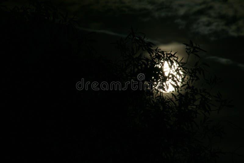 Lune complètement photos libres de droits
