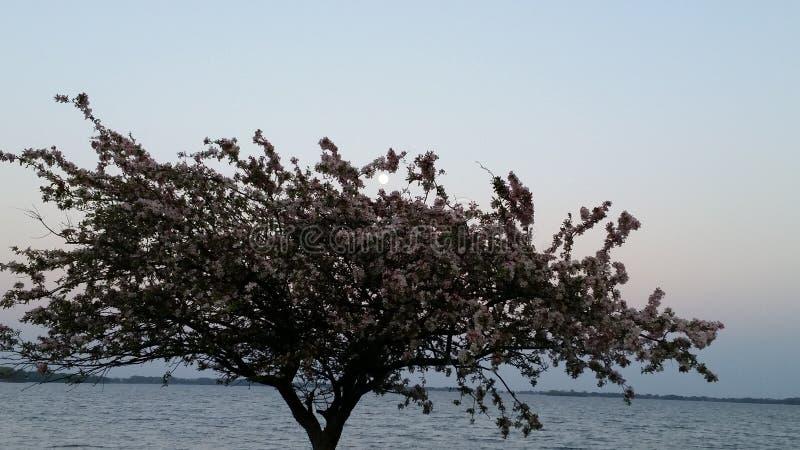 Lune d'arbre images libres de droits