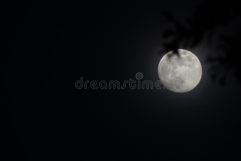 Lune d'?t? images stock
