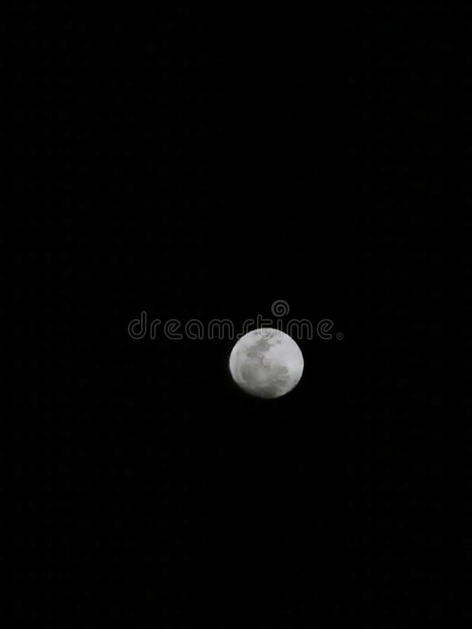 Lune de lapin photo stock