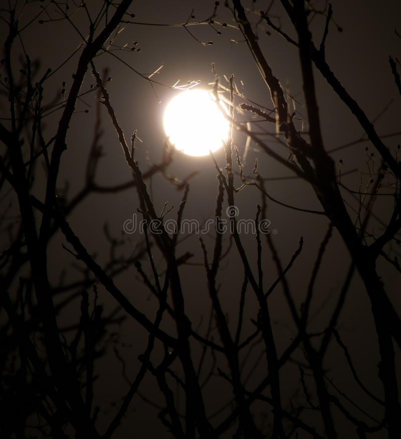 Lune de minuit photo stock