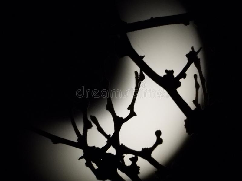 Lune derrière des arbres photos libres de droits