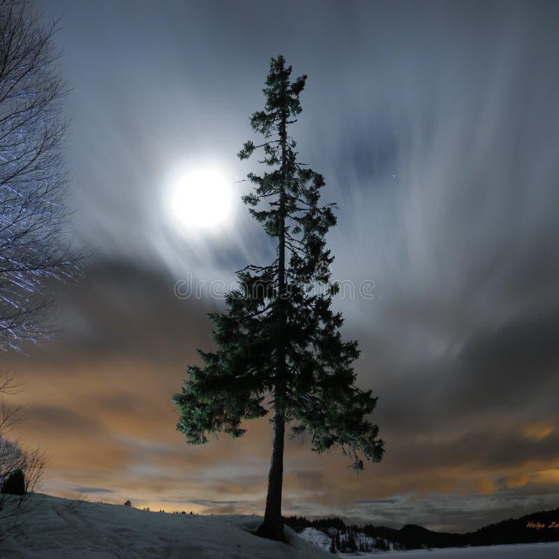 Lune derrière l'arbre images libres de droits