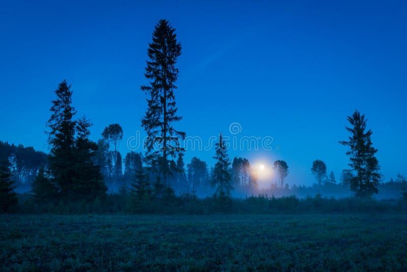 Lune en hausse au-dessus d'une forêt brumeuse au crépuscule photos libres de droits