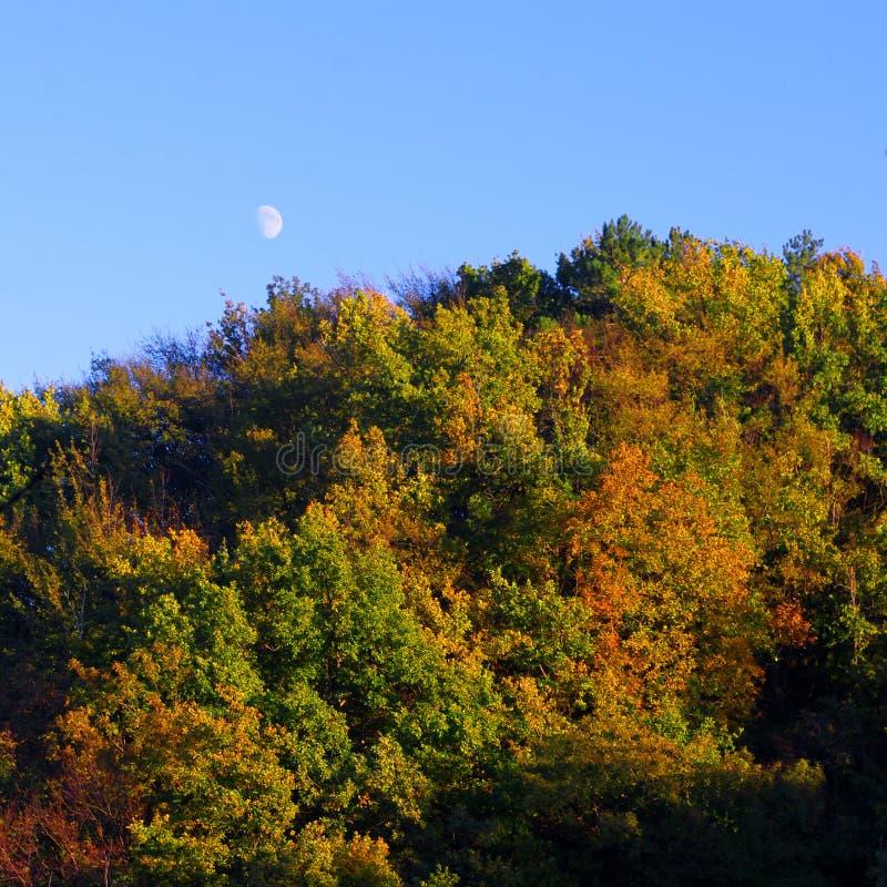 Lune en hausse sur la forêt automnale image stock