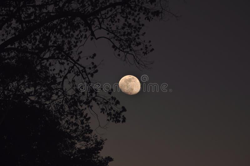 Lune entre les branchs images stock