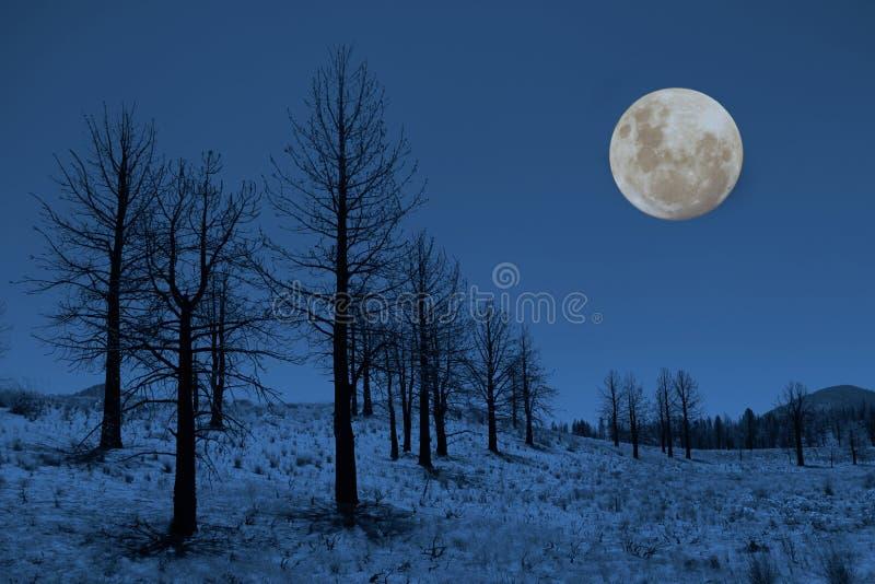 Lune et arbres dans les sierras photo stock