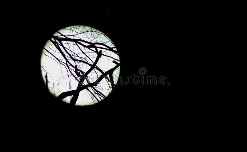 Lune focalisée photos libres de droits