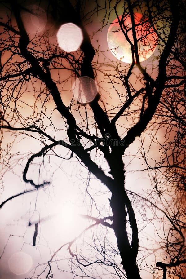 Lune par le télescope par la silhouette de l'arbre nu images stock