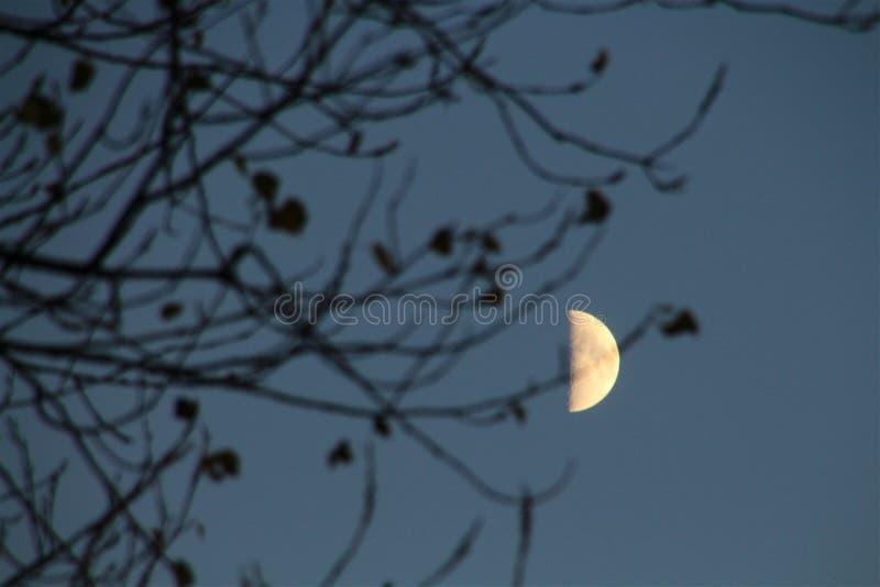 Lune presque pleine en novembre photographie stock libre de droits