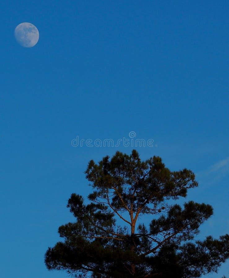 Lune se levant au-dessus d'un arbre dans Sedona images stock