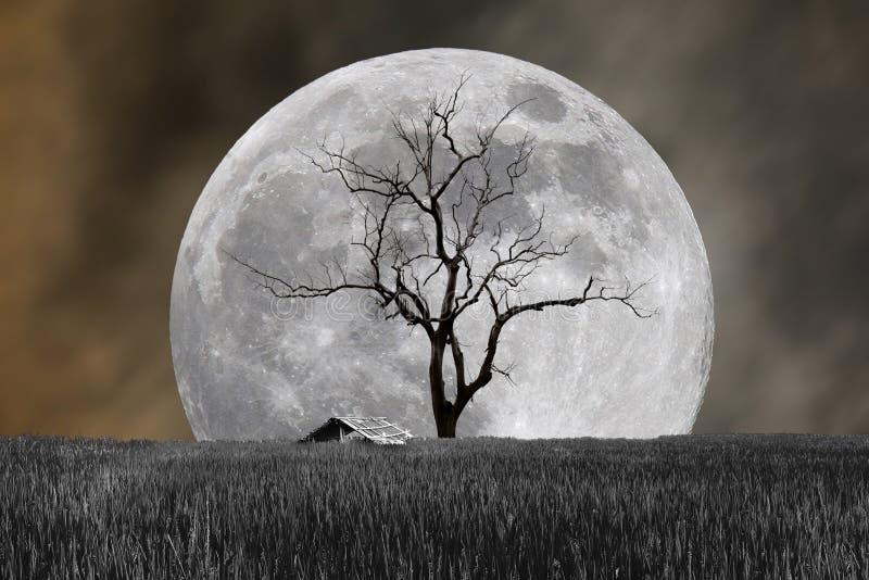 Lune superbe et arbre stérile avec la hutte dans le festival de Halloween de nuit images libres de droits