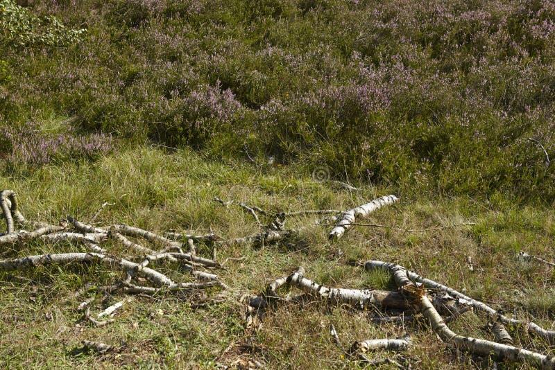 Download Luneburg在埃格斯托尔夫附近的荒地-腐烂的早午餐和荒地 库存图片 - 图片 包括有 腐烂, 旅游业: 59100123